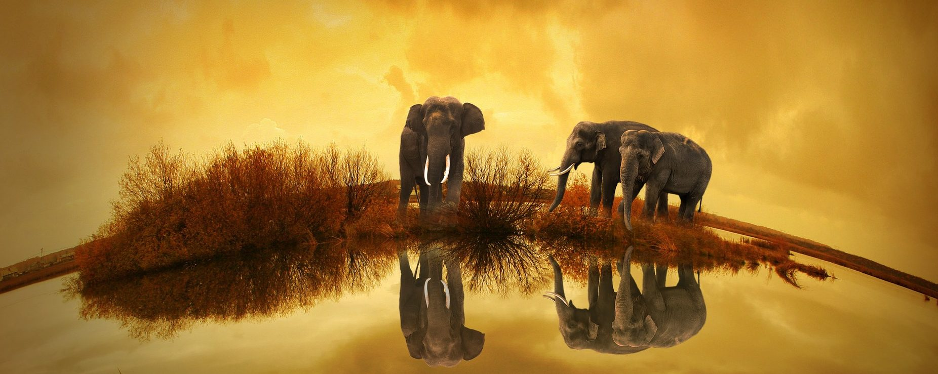 Elephants and its Facts